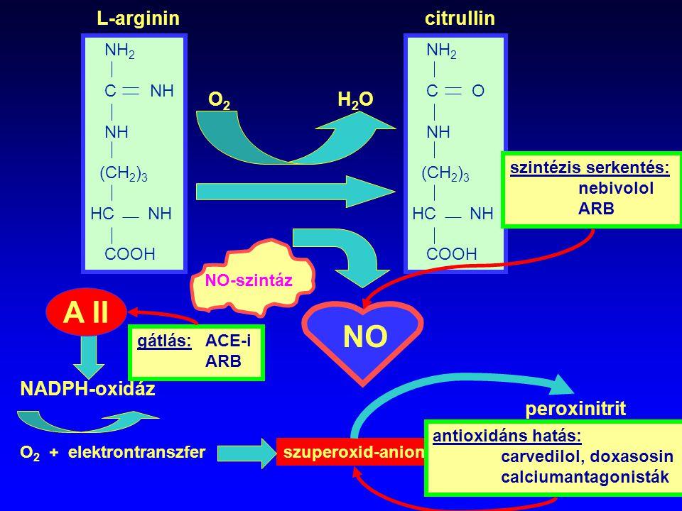 A II NO L-arginin citrullin O2 H2O NADPH-oxidáz peroxinitrit NH2 C NH