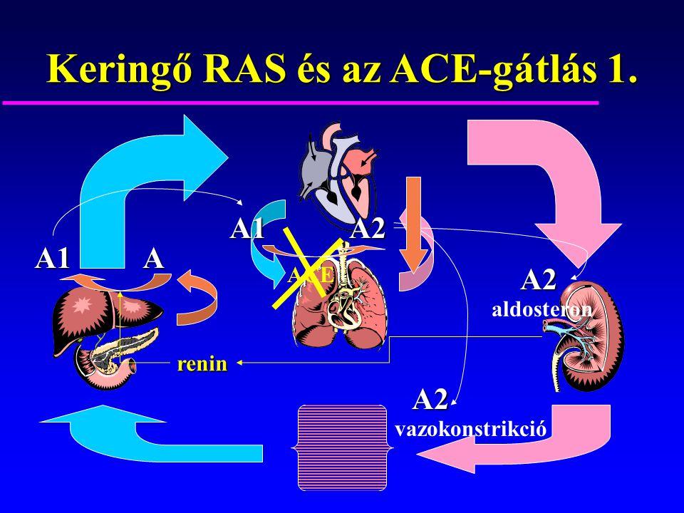 Keringő RAS és az ACE-gátlás 1.