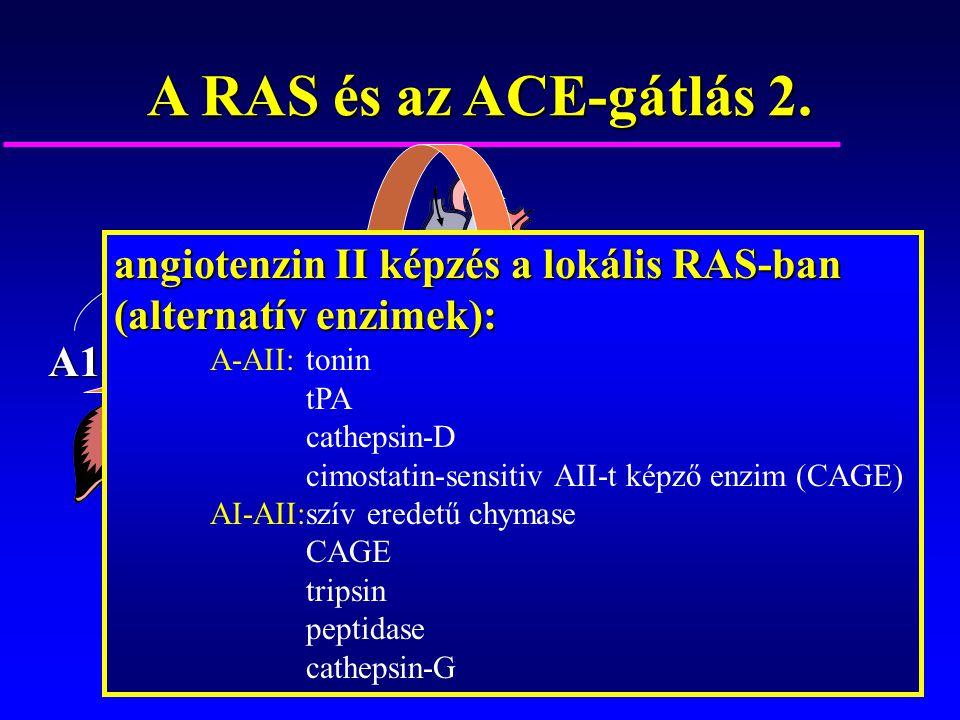 A RAS és az ACE-gátlás 2. angiotenzin II képzés a lokális RAS-ban