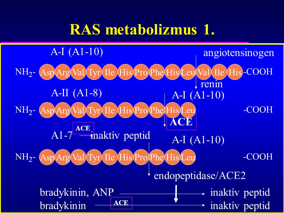 RAS metabolizmus 1. A-I (A1-10) angiotensinogen renin A-II (A1-8)