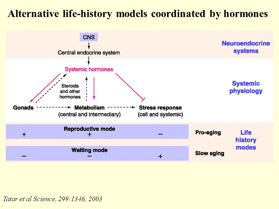 Alternative life-history models coordinated by hormones