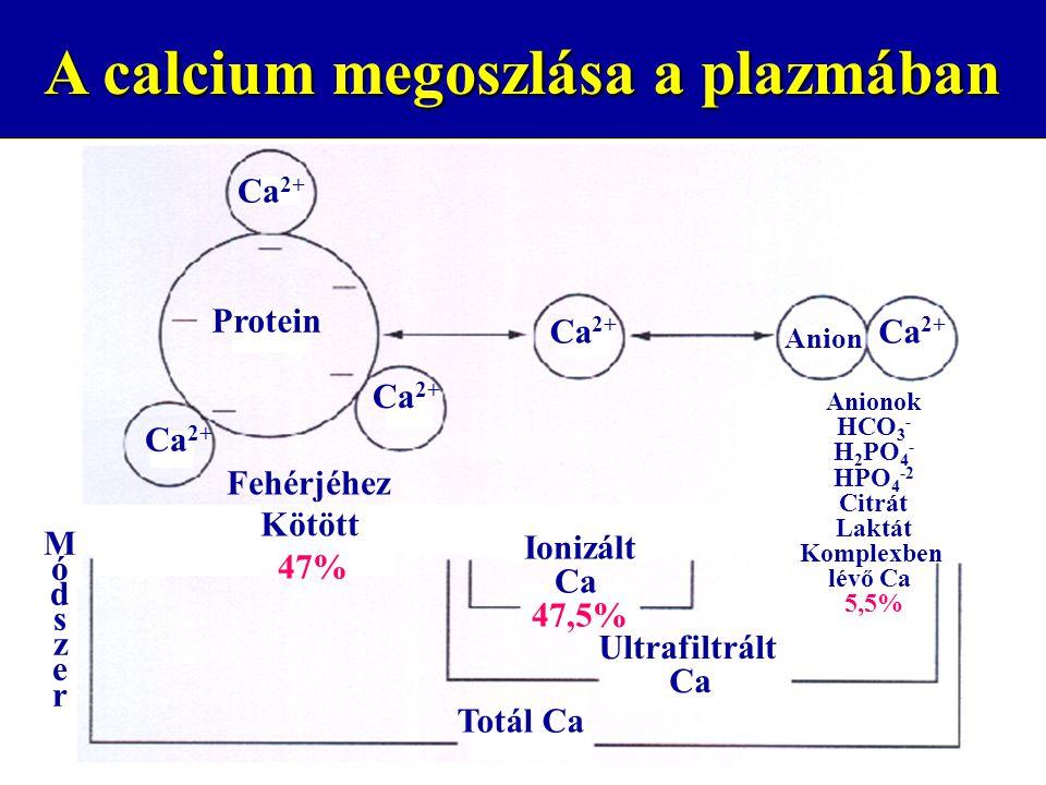 A calcium megoszlása a plazmában