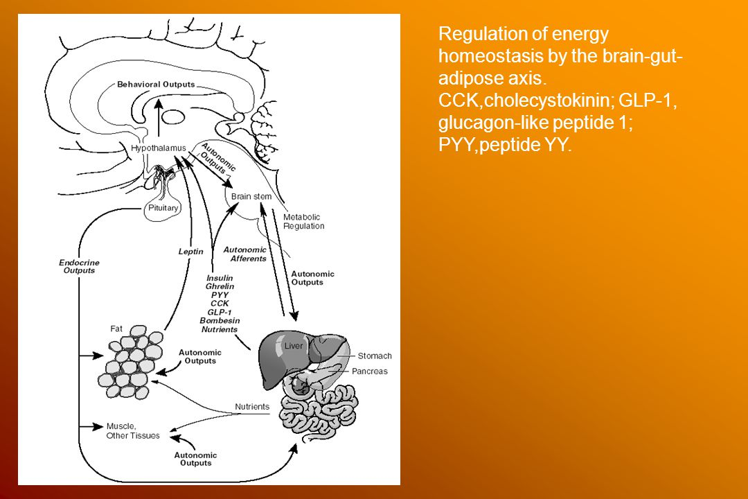 Regulation of energy homeostasis by the brain-gut-adipose axis