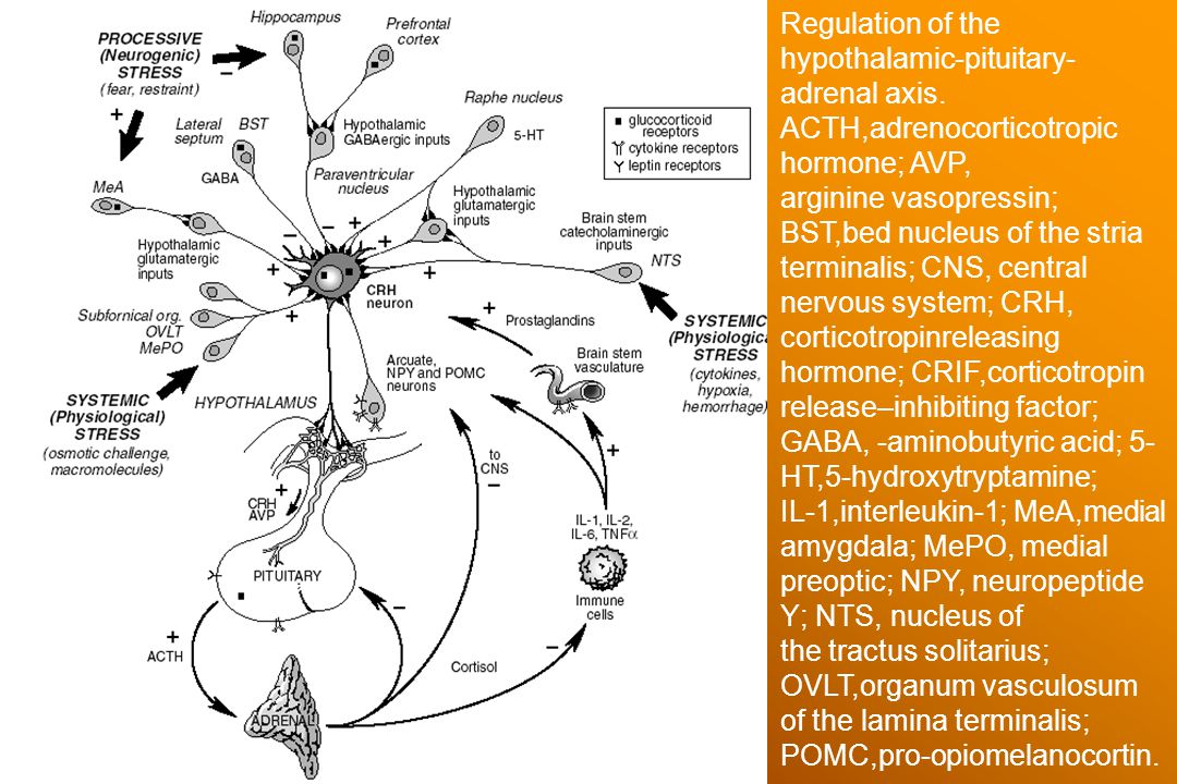 Regulation of the hypothalamic-pituitary-adrenal axis