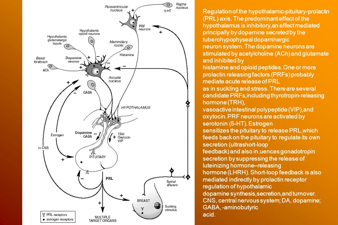Regulation of the hypothalamic-pituitary-prolactin (PRL) axis