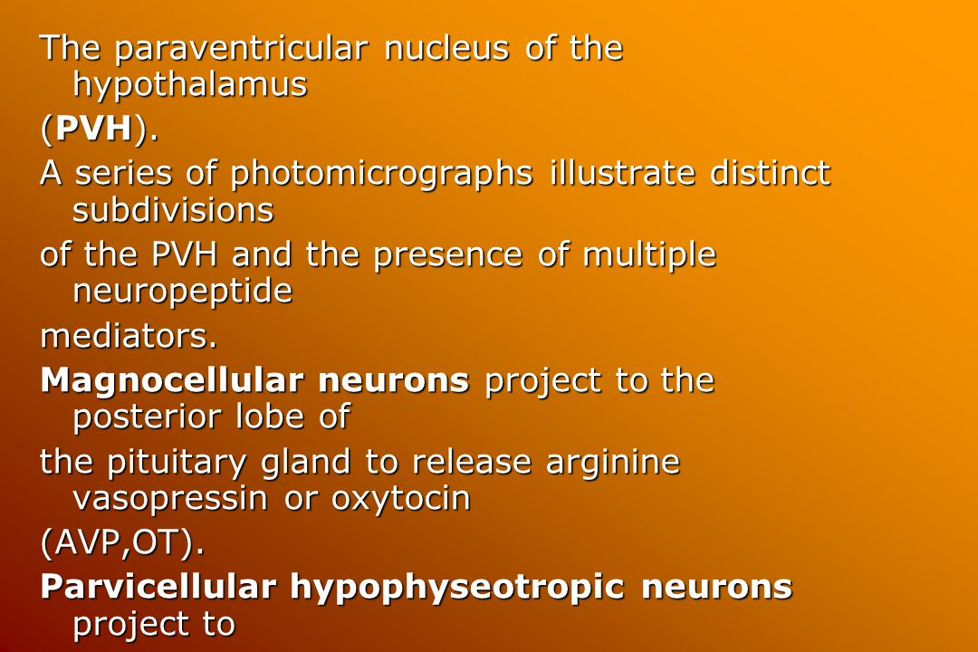 The paraventricular nucleus of the hypothalamus