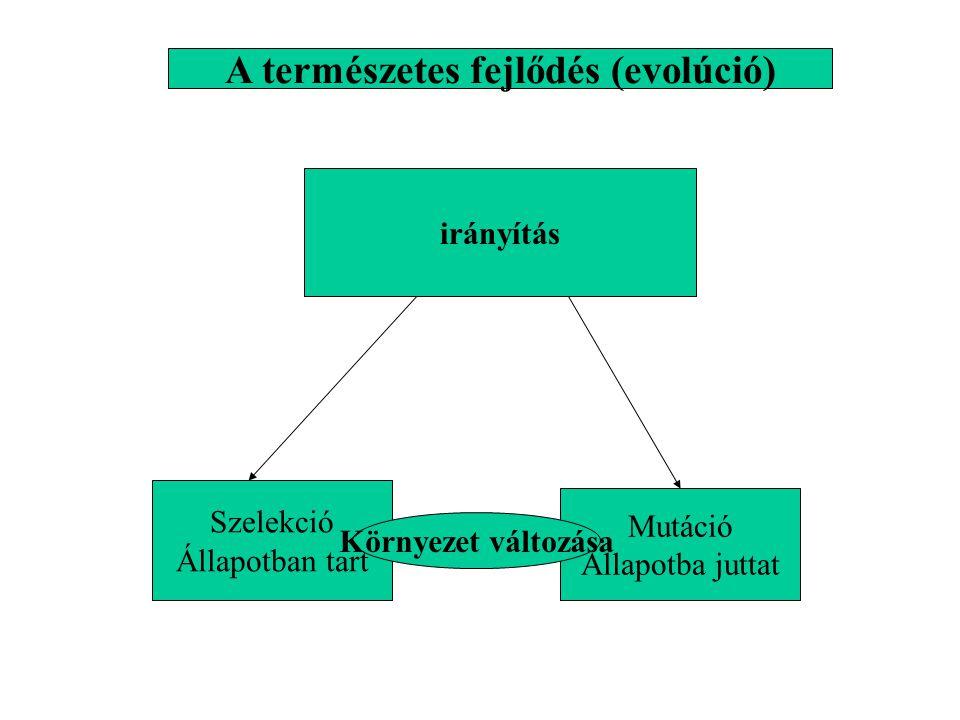 A természetes fejlődés (evolúció)