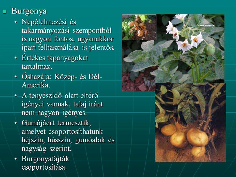 Burgonya Népélelmezési és takarmányozási szempontból is nagyon fontos, ugyanakkor ipari felhasználása is jelentős.