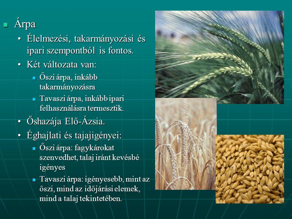 Árpa Élelmezési, takarmányozási és ipari szempontból is fontos.