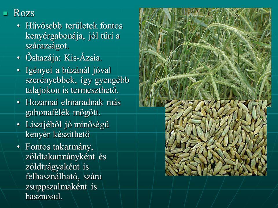 Rozs Hűvösebb területek fontos kenyérgabonája, jól tűri a szárazságot.