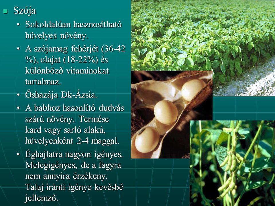 Szója Sokoldalúan hasznosítható hüvelyes növény.