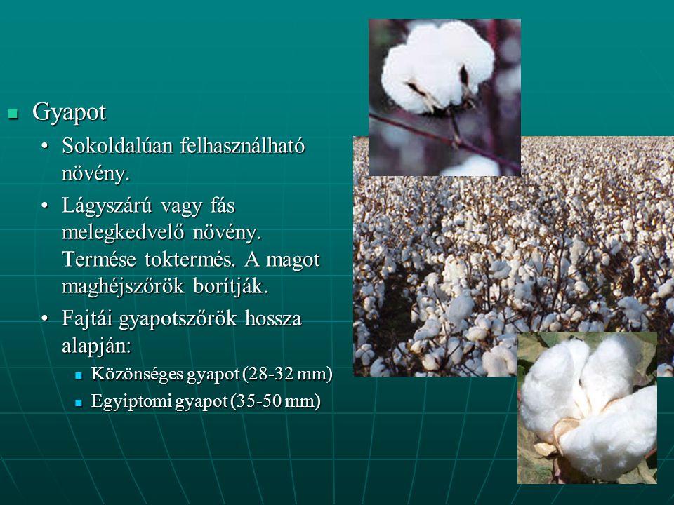Gyapot Sokoldalúan felhasználható növény.