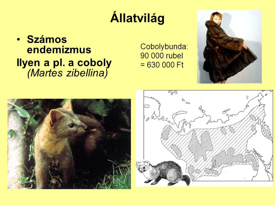 Állatvilág Számos endemizmus Ilyen a pl. a coboly (Martes zibellina)