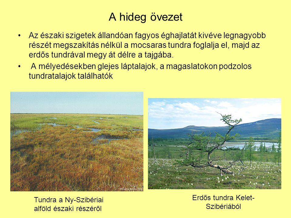 Erdős tundra Kelet-Szibériából