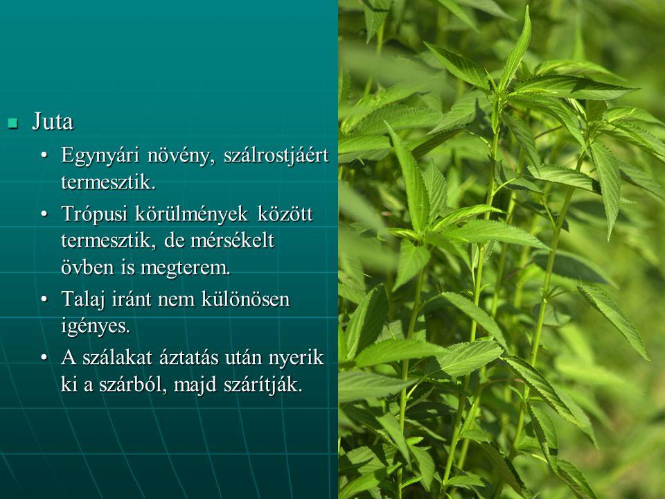 Juta Egynyári növény, szálrostjáért termesztik.
