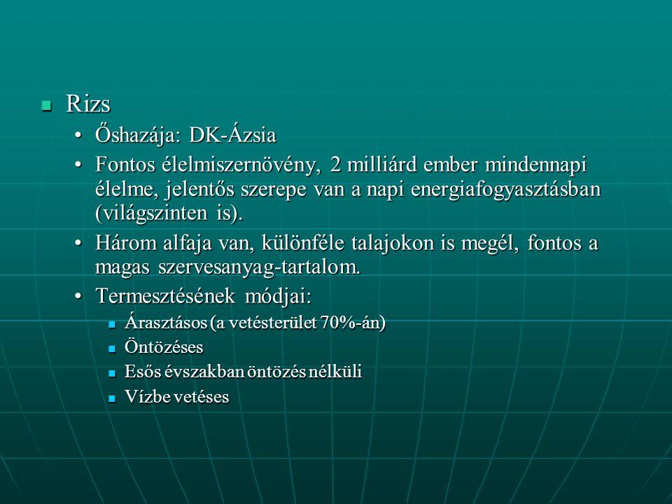 Rizs Őshazája: DK-Ázsia