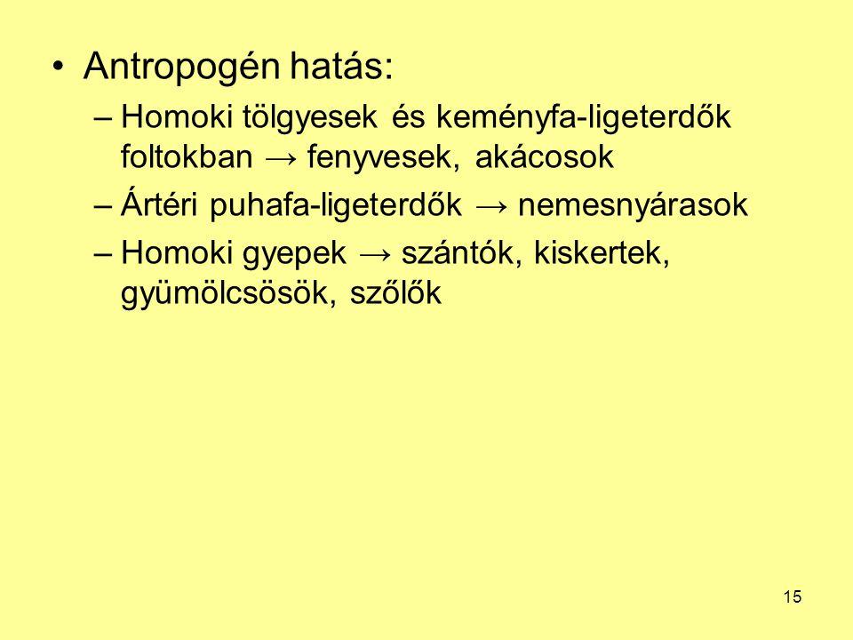 Antropogén hatás: Homoki tölgyesek és keményfa-ligeterdők foltokban → fenyvesek, akácosok. Ártéri puhafa-ligeterdők → nemesnyárasok.