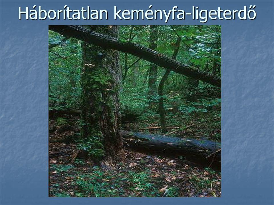 Háborítatlan keményfa-ligeterdő