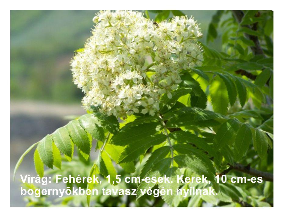 Virág: Fehérek, 1,5 cm-esek