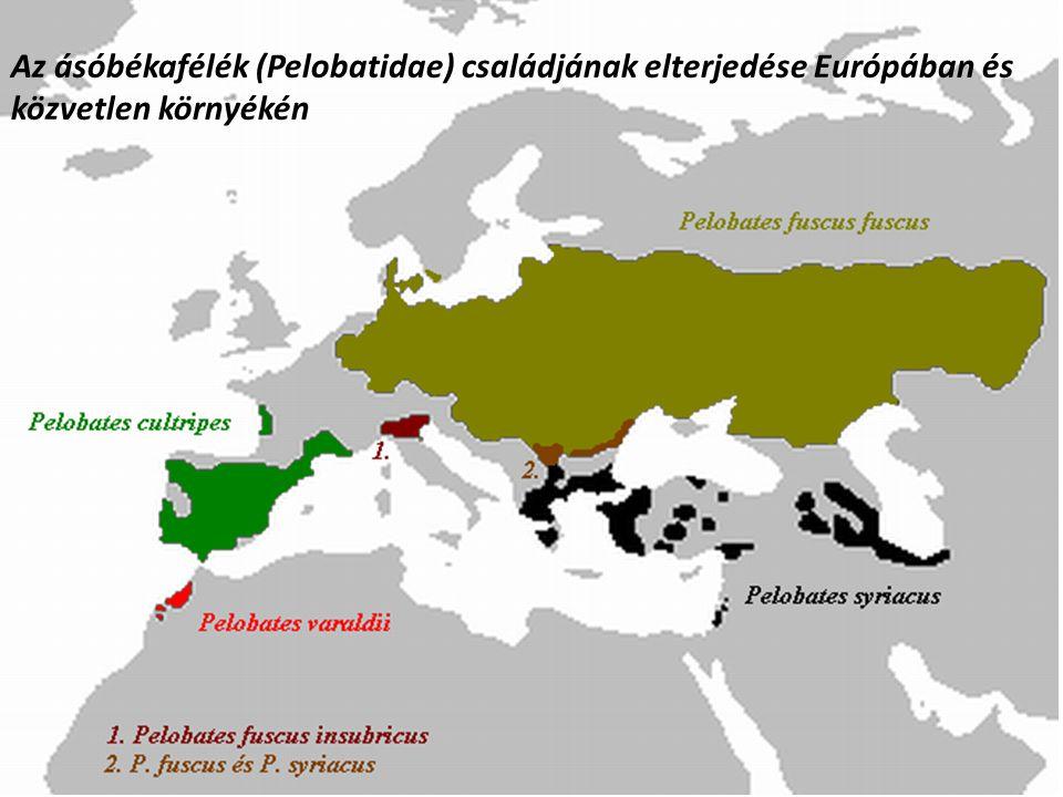 Az ásóbékafélék (Pelobatidae) családjának elterjedése Európában és közvetlen környékén