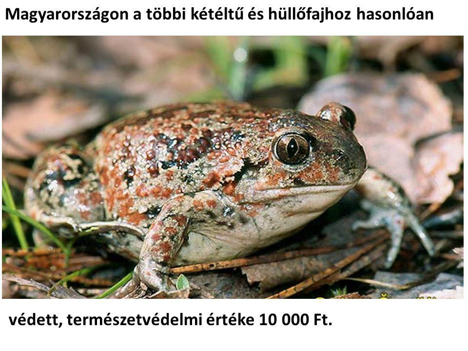 Magyarországon a többi kétéltű és hüllőfajhoz hasonlóan