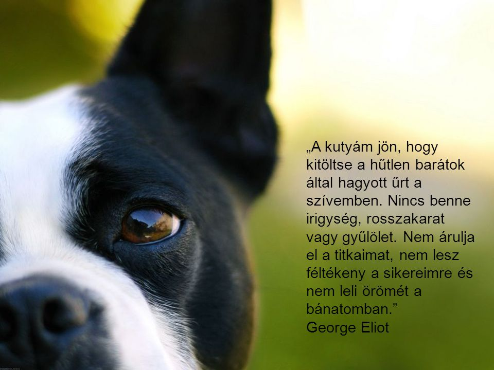 """""""A kutyám jön, hogy kitöltse a hűtlen barátok által hagyott űrt a szívemben. Nincs benne irigység, rosszakarat vagy gyűlölet. Nem árulja el a titkaimat, nem lesz féltékeny a sikereimre és nem leli örömét a bánatomban."""