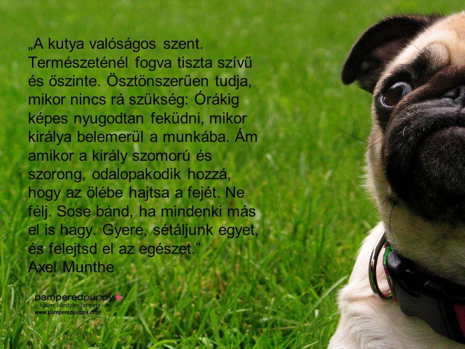"""""""A kutya valóságos szent. Természeténél fogva tiszta szívű és őszinte"""