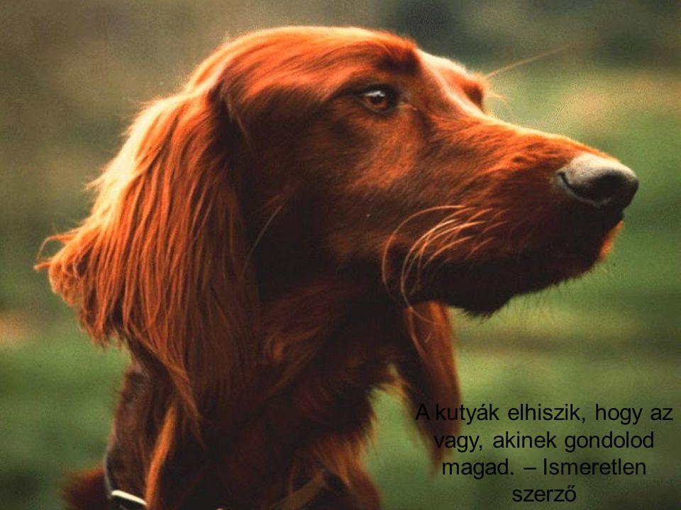 A kutyák elhiszik, hogy az vagy, akinek gondolod magad