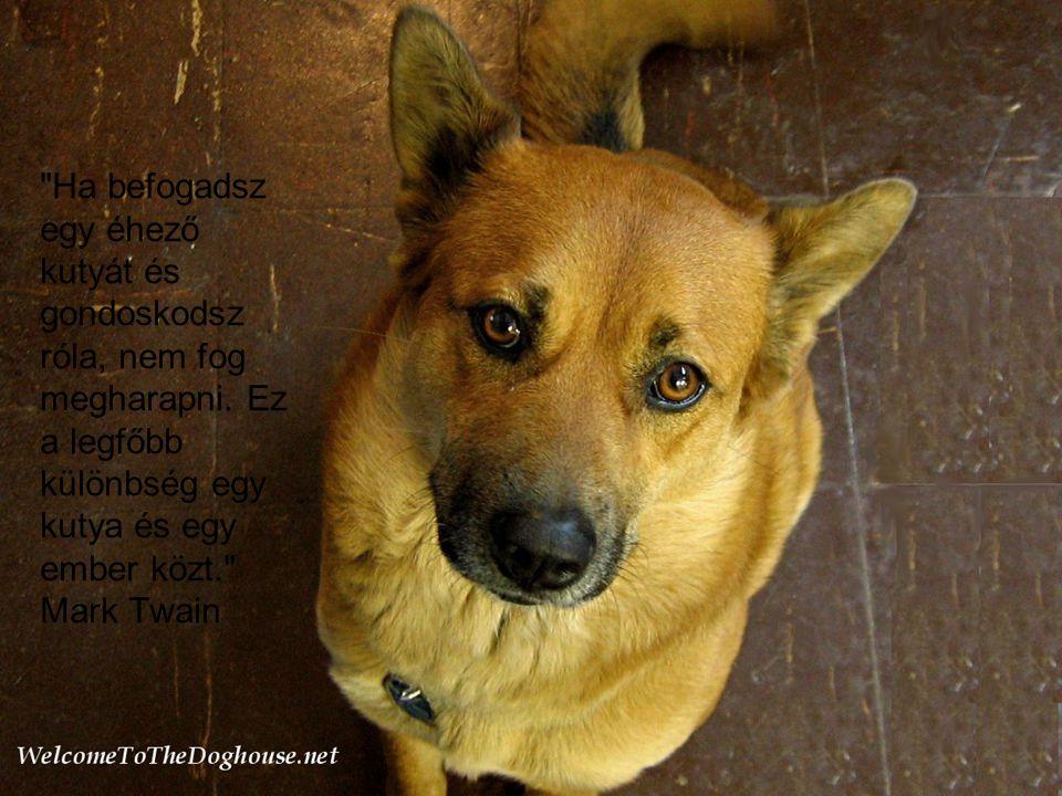 Ha befogadsz egy éhező kutyát és gondoskodsz róla, nem fog megharapni