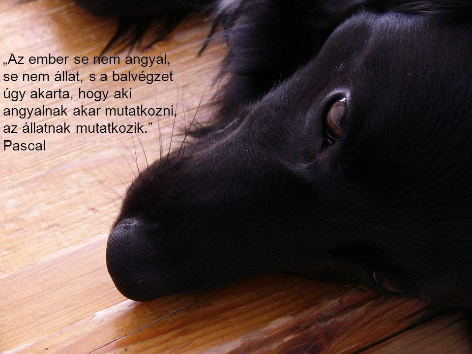 """""""Az ember se nem angyal, se nem állat, s a balvégzet úgy akarta, hogy aki angyalnak akar mutatkozni, az állatnak mutatkozik."""