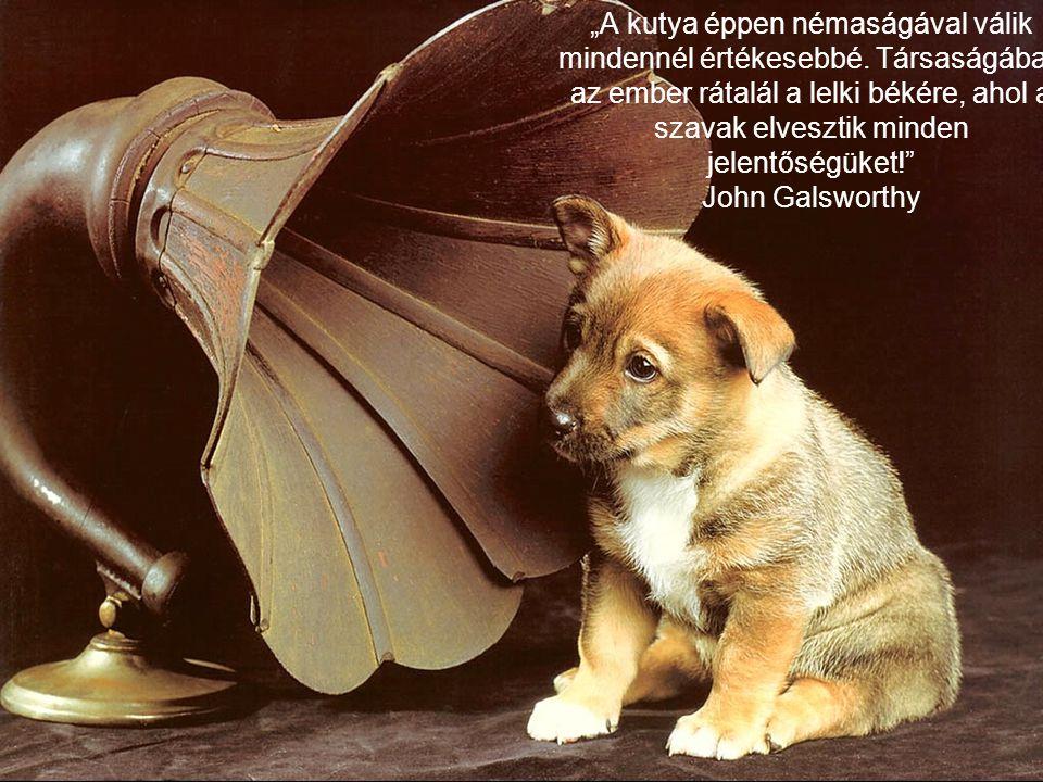 """""""A kutya éppen némaságával válik mindennél értékesebbé"""