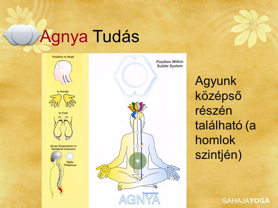 Agnya Tudás Agyunk középső részén található (a homlok szintjén)