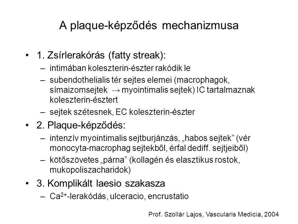 A plaque-képződés mechanizmusa