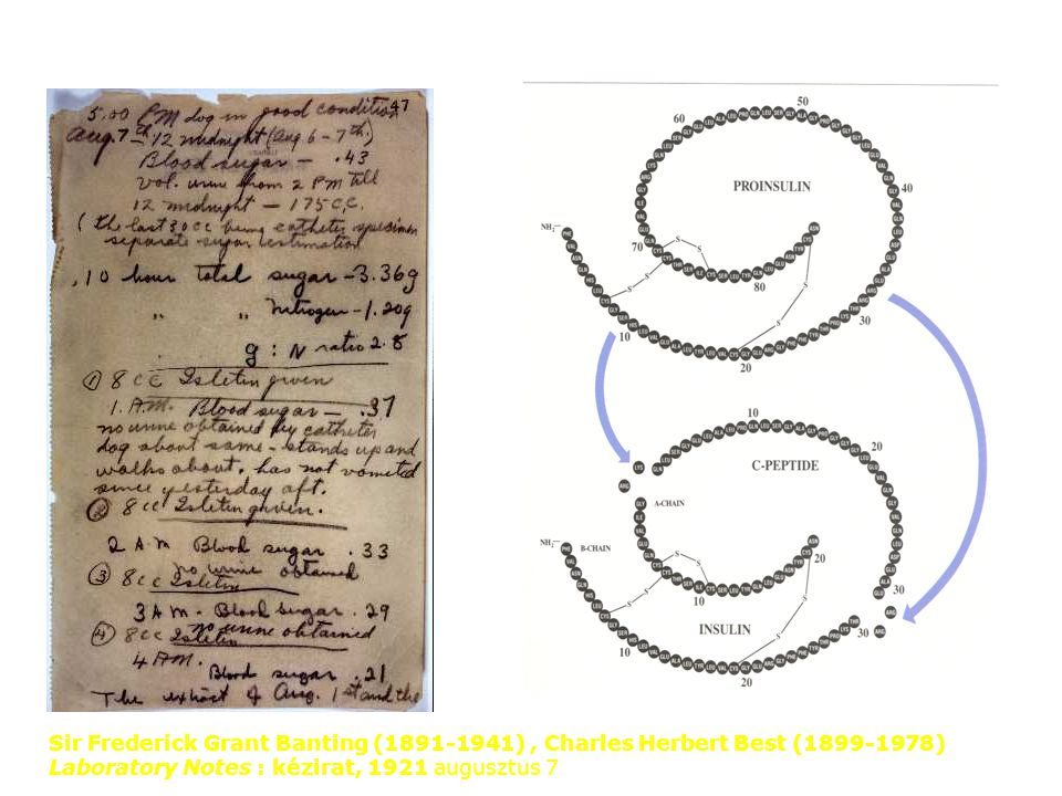 Sir Frederick Grant Banting (1891-1941) , Charles Herbert Best (1899-1978) Laboratory Notes : kézirat, 1921 augusztus 7