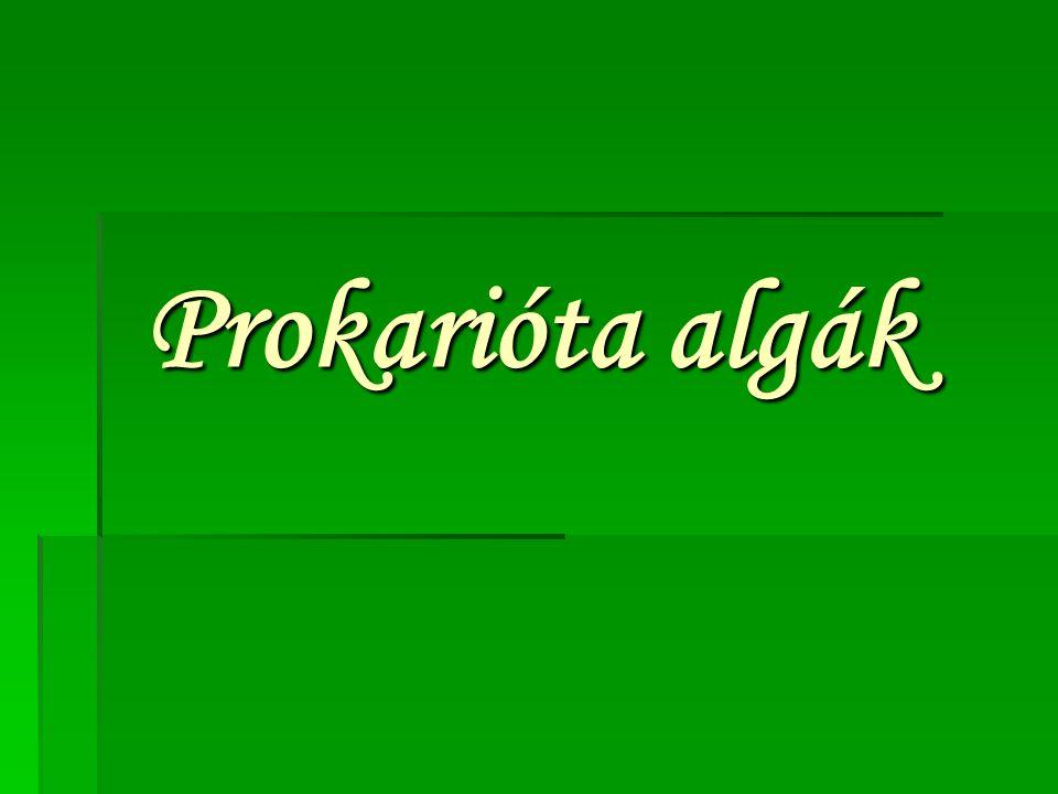Prokarióta algák