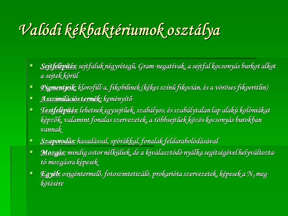 Valódi kékbaktériumok osztálya