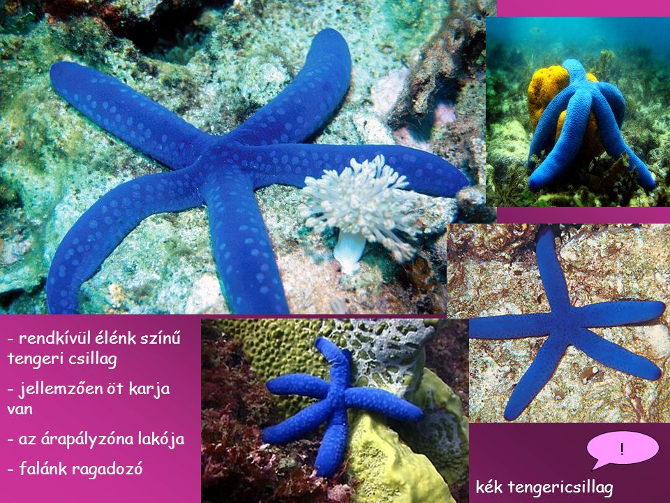 rendkívül élénk színű tengeri csillag