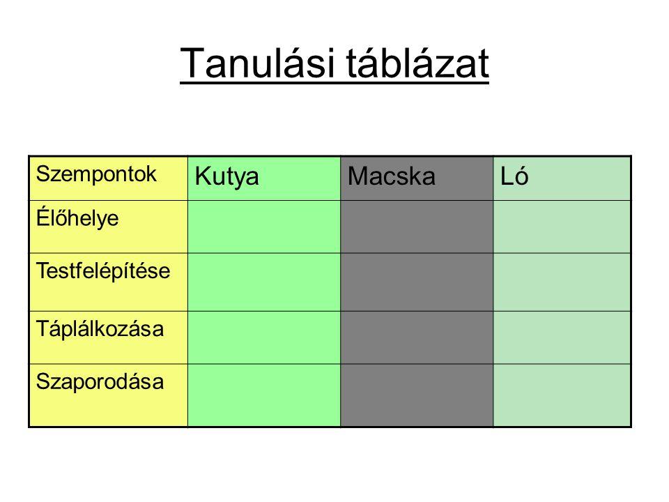 Tanulási táblázat Kutya Macska Ló Szempontok Élőhelye Testfelépítése