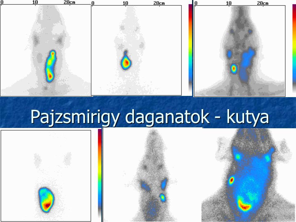 Pajzsmirigy daganatok - kutya