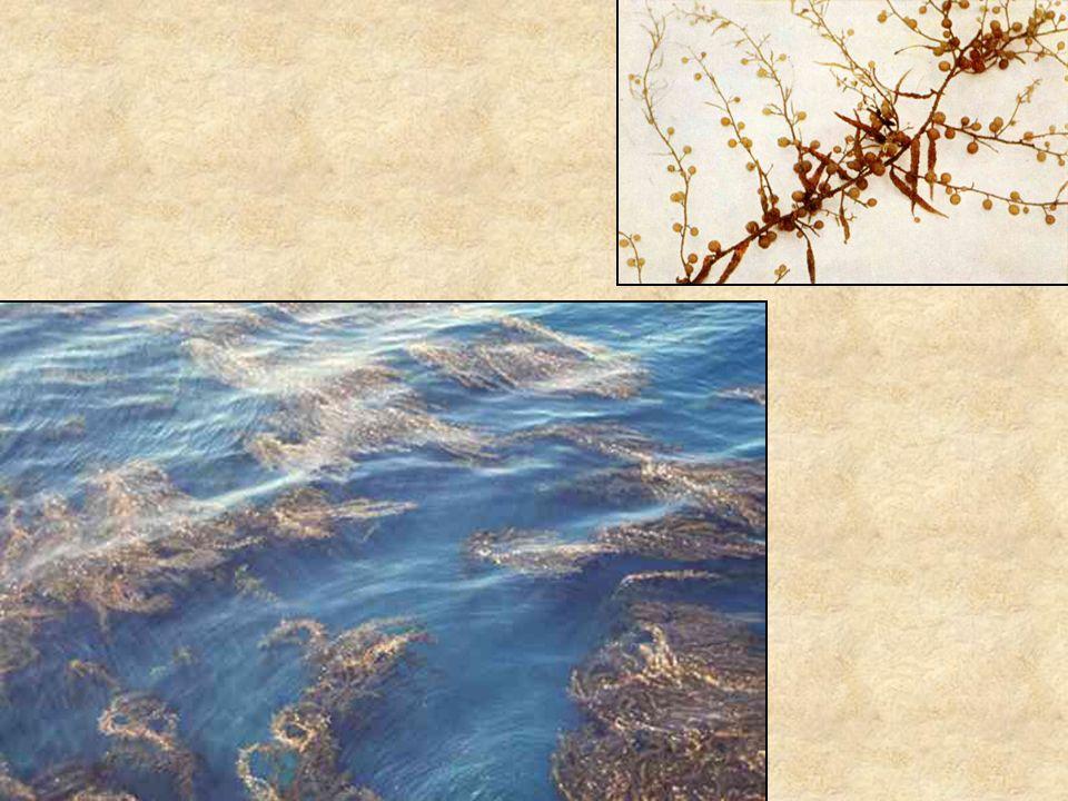 Barnamoszat Felső kép: Uránia növényvilág - Alacsonyabbrendű növények, Gondolat kiadó.