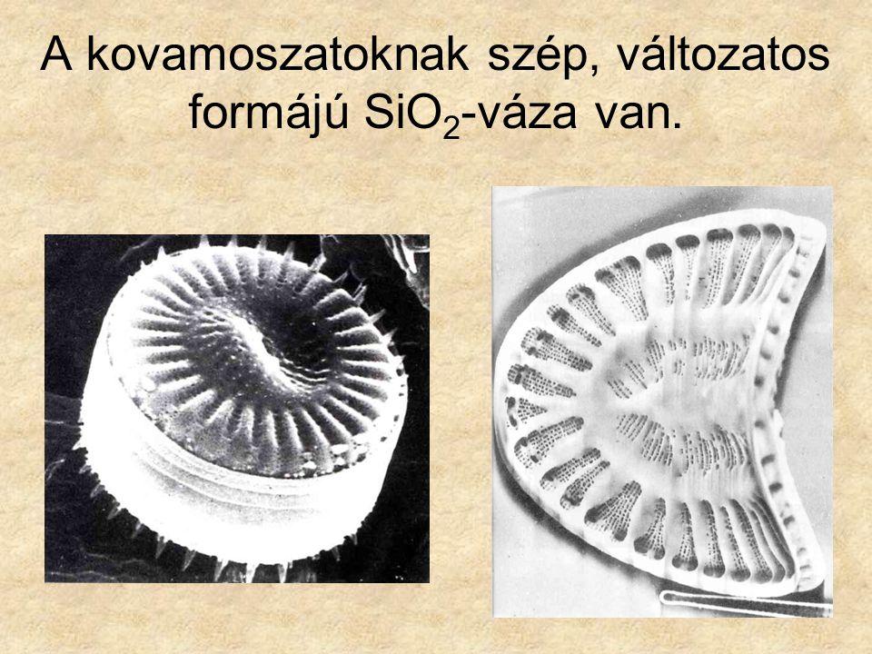 A kovamoszatoknak szép, változatos formájú SiO2-váza van.