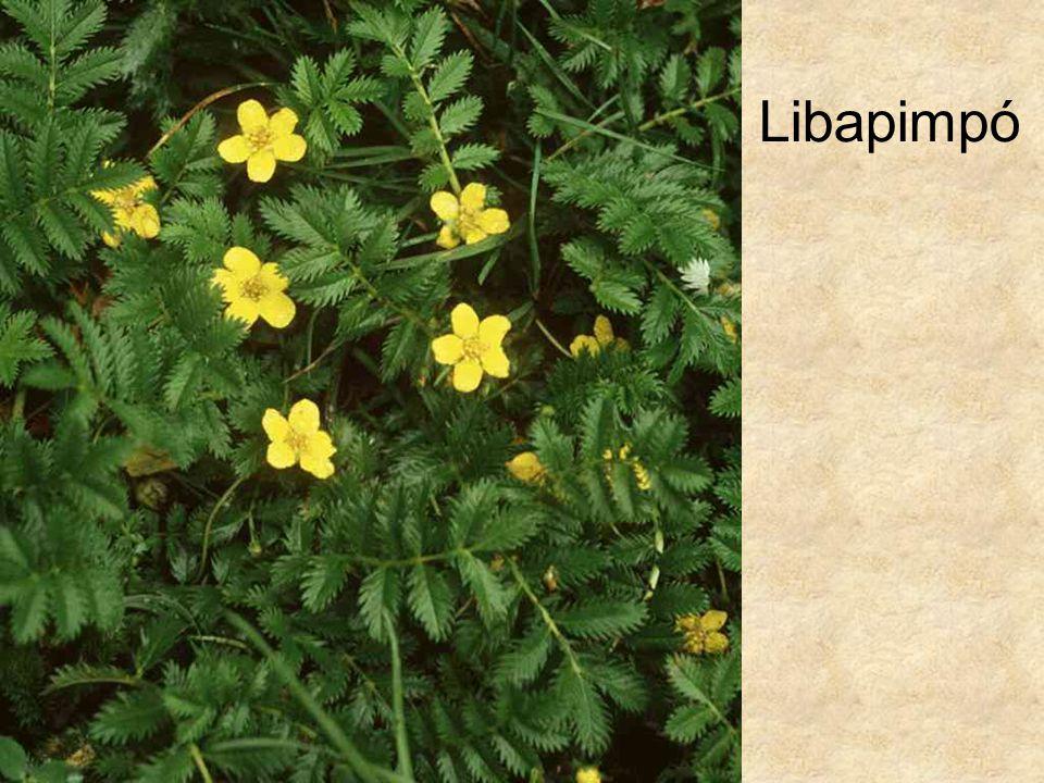 Libapimpó HERBÁRIUM – Magyarország növényei CD, Kossuth Kiadó