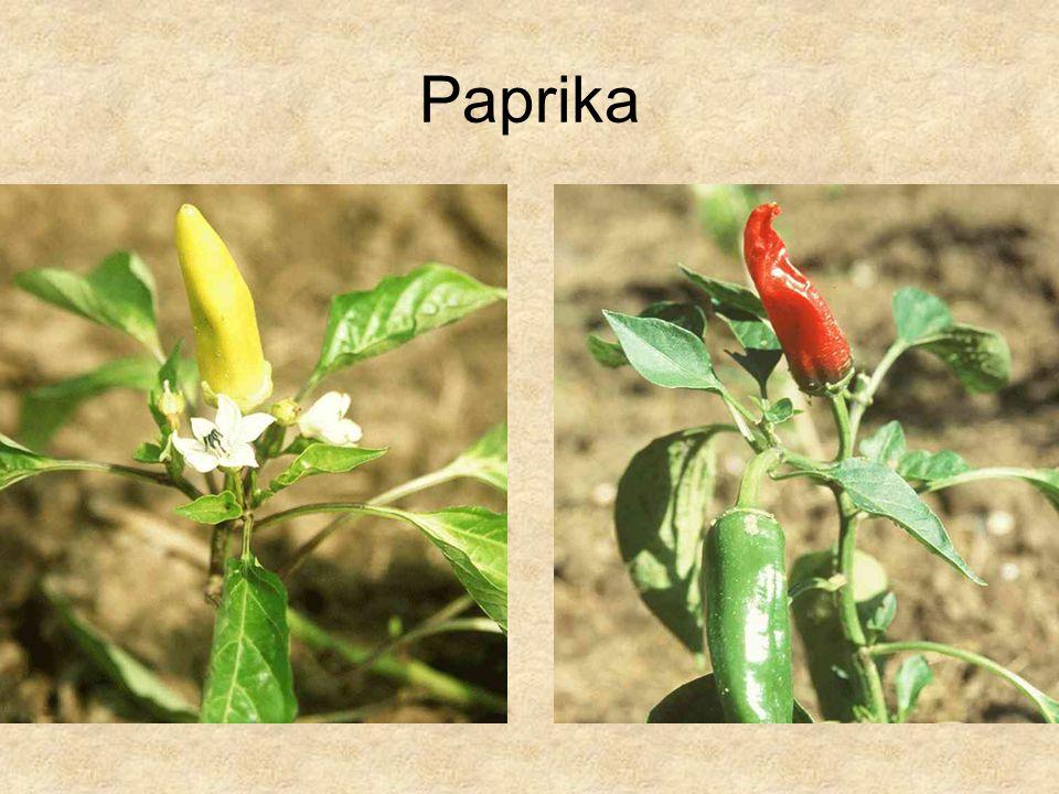 Paprika HERBÁRIUM – Magyarország növényei CD, Kossuth Kiadó