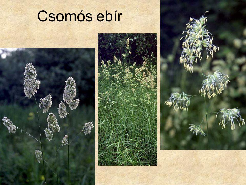 Csomós ebír Hazánk növényvilága CD, Terra alapítvány