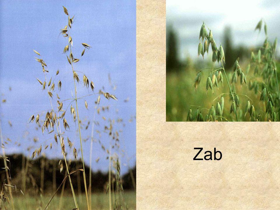 Zab Bal oldali kép: Füvek, Magyar Könyvklub Természetkalauz sorozat