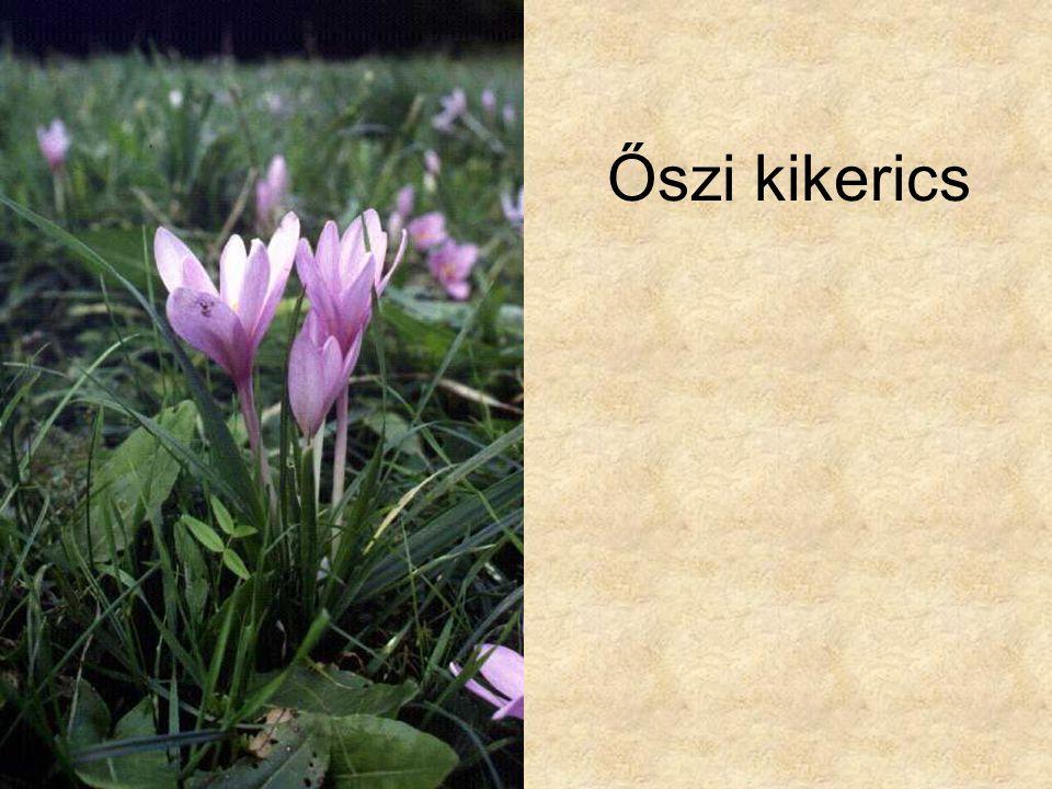 Őszi kikerics Hazánk növényvilága CD, Terra alapítvány