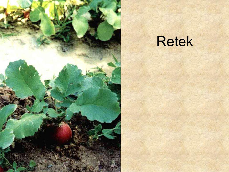 Retek Simon-Seregélyes: Növényismeret, Nemzeti Tankönyvkiadó, 1998.