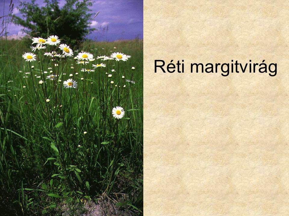 Réti margitvirág Vadvirágok CD, Kossuth Kiadó