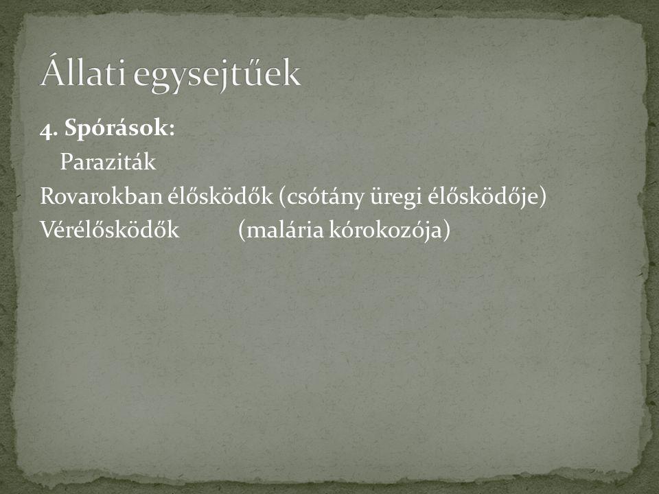 Állati egysejtűek 4.