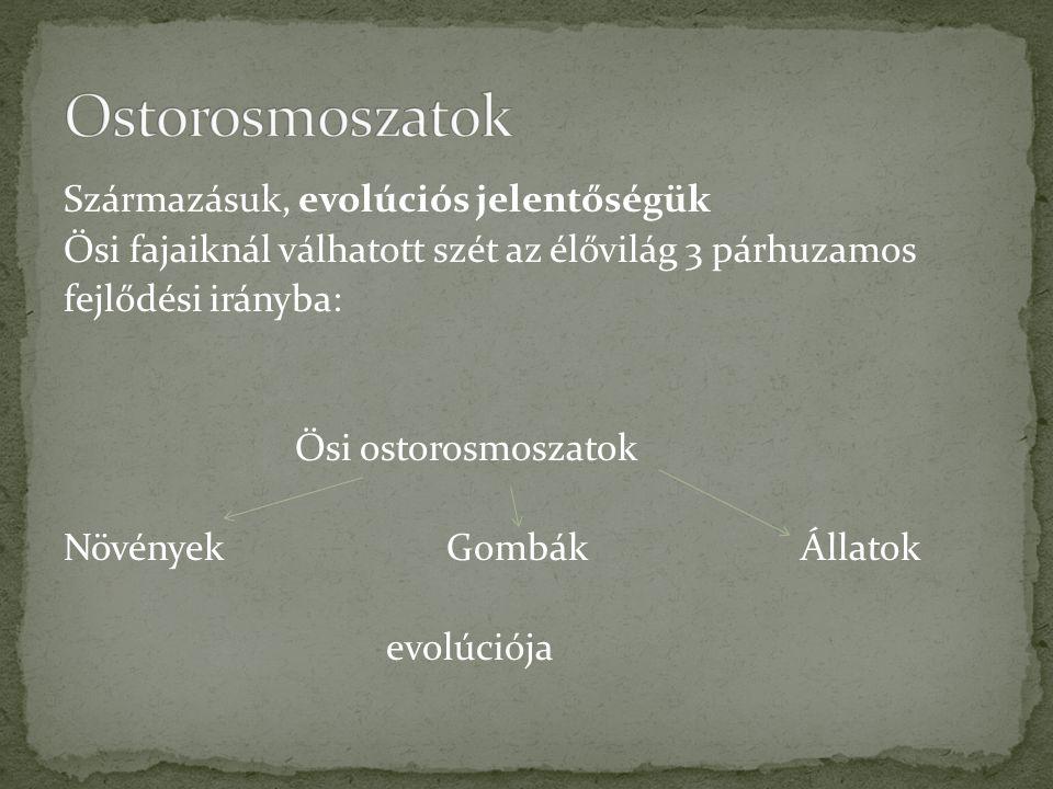 Ostorosmoszatok Származásuk, evolúciós jelentőségük